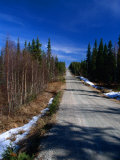 Road Through Forest, Lappi, Finland Photographic Print by David Tipling