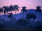 Palm Trees at Yumuri Valley at Sunset, Matanzas, Cuba Photographic Print by Rick Gerharter