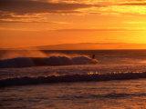 Surfer at St. Kilda Beach, Dunedin, New Zealand Reproduction photographique par David Wall