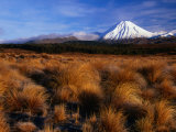 Mt. Ngauruhoe Through Grassy Landscape, Tongariro National Park, Manawatu-Wanganui, New Zealand Stampa fotografica di David Wall