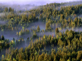 Fog Shrouding Pine Forests in Jackson Hole Valley Region, Grand Teton National Park, Wyoming, USA Photographic Print by Stephen Saks