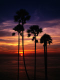 Sunset and Silhouetted Palm Trees at Phrom Thep Cape, Thailand Photographic Print by Manfred Gottschalk