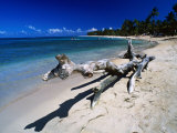 A Large Piece of Driftwood on the Idyllic Tropical Beach at Las Terrenas,Dominican Republic Photographic Print by Alfredo Maiquez
