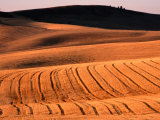 Harvested Wheat Fields, Palouse Region, Palouse, USA Photographic Print by Nicholas Pavloff