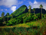 Palm Trees and Dense Jungle Peaks, Rarotonga, Southern Group, Cook Islands Fotografie-Druck von Peter Hendrie