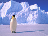 Emperor Penguins, Cape Darnley, Australian Antarctic Territory, Antarctica Photographie par Pete Oxford