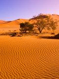 Sand Dune Landscape, Sossusvlei, Namibia World Heritage Site, Namib-Naukluft National Park, Namibia Photographic Print by Michele Westmorland