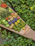 Detail of Boat in Water Lilies, Floating Market, Bangkok, Thailand Fotodruck von Philip Kramer