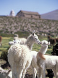 Mother and Baby Alpaca with Catholic Church in the Distance, Village of Mauque, Chile Photographic Print by Lin Alder