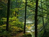 Texas Falls, Vermont, USA Fotografisk trykk av Joe Restuccia III