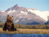 Brown Bear with Salmon Catch, Katmai National Park, Alaskan Peninsula, USA Stampa fotografica di Steve Kazlowski