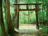 Mountain Shrine, Yakushima, Kagoshima, Japan Fotodruck von Rob Tilley