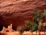 Anasazi Antelope House Ruin and Cottonwood Trees, Canyon de Chelly National Monument, Arizona, USA Photographic Print by Alison Jones