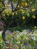 Walter Bibikow - Garden Detail, San Domenico Palace Hotel, Taormina, Sicily, Italy Fotografická reprodukce