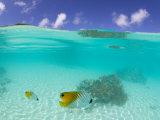 Le Maitai Dream Fakarava Resort, Fakarava, Tuamotus, French Polynesia Reproduction photographique par Michele Westmorland
