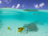 Michele Westmorland - Le Maitai Dream Fakarava Resort, Fakarava, Tuamotus, French Polynesia Fotografická reprodukce