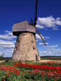 Windmill Surrounded by Red Tulips in Gauja National Park, Latvia Photographic Print by Janis Miglavs