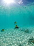 Le Maitai Dream Fakarava Resort, Fakarava, Tuamotus, French Polynesia Papier Photo par Michele Westmorland