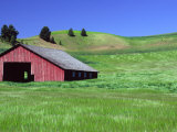 Barn in Field of Wheat, Palouse Area, Washington, USA Photographic Print by Janell Davidson