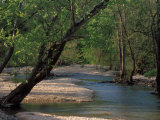 Early Morning Light on Bull Creek, Missouri, USA Photographic Print by Gayle Harper