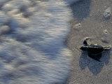 Fauna, Sea turtles, Yucatan, Mexico Photographic Print by Kenneth Garrett