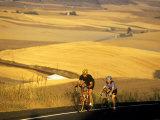 Road Cyclists Biking Through Wheat Harvest, near Pullman, Washington, USA Fotoprint van Chuck Haney