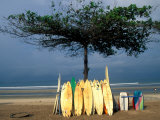 Surfboards Lean Against Lone Tree on Beach in Kuta, Bali, Indonesia Stampa fotografica di Paul Souders