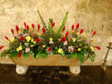 Flowers in Former Colonial Convent, Casa Santo Domingo Hotel, Antigua, Guatemala Photographic Print by Cindy Miller Hopkins
