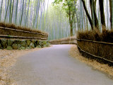 Bamboo Line, Kyoto, Japan Photographic Print by Shin Terada