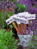 Lavender Stakes with Names and Lavender in Pots, Washington, USA Photographic Print by Janell Davidson