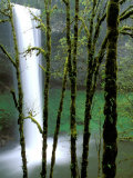 South Falls, Silver Falls State Park, Oregon, USA Photographic Print by Jamie & Judy Wild