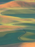 Palouse Farmland, View from Steptoe Butte, Whitman County, Washington, USA Photographic Print by Jamie & Judy Wild