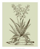 Vintage Aloe III Giclee Print by Abraham Munting