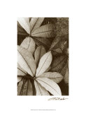 Garden Textures I Premium Giclee Print by Laura Denardo