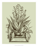 Vintage Aloe IV Giclee Print by Abraham Munting