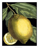Fragrant Citrus II Giclee Print by  Volkamer