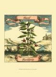 Albahaca Posters por Theodor de Bry