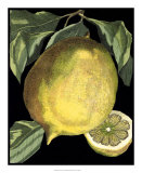 Fragrant Citrus I Giclee Print by  Volkamer