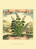 Minze Poster von Theodor de Bry