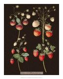 Brookshaw Strawberries Giclee Print by George Brookshaw