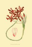 Le Fleur Rouge II Prints by Sydenham Teast Edwards