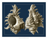Conch Shells on Navy II Giclee Print