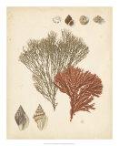 Coastal Relic IV Giclee Print