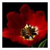 Shimmering Tulips II Giclee Print by Renee Stramel