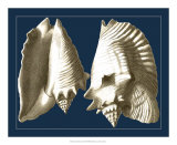 Conch Shells on Navy I Giclee Print