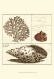 Shell Classification III Prints