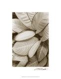 Garden Textures II Premium Giclee Print by Laura Denardo