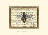 Bumblebee Harmony II Prints