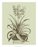 Vintage Aloe II Giclee Print by Abraham Munting