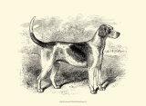 Foxhound, Giclee Print